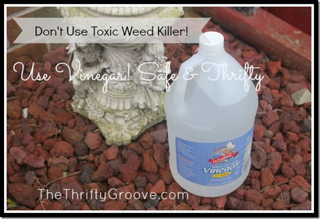 use vinegar instead of deadly toxins for killing weeds. @TheThriftyGroove.com eco-friendly, natural, green, organic and thrifty