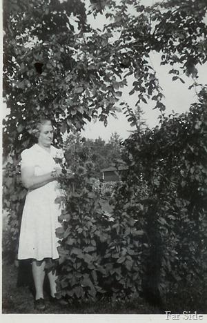 Grandma H with her Dahlias on the farm