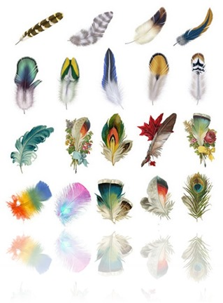 Beautiful-feather-psd-graphics