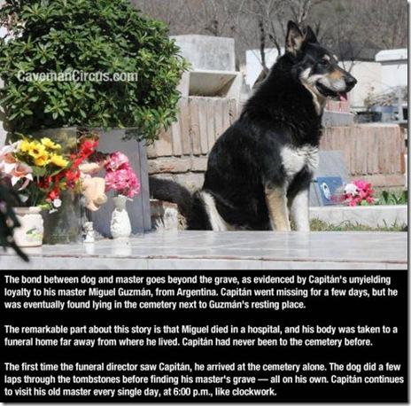 dog-love-friend-013