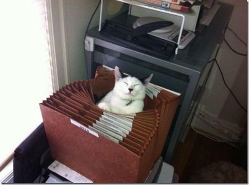 gatos sitios para esconderse (25)