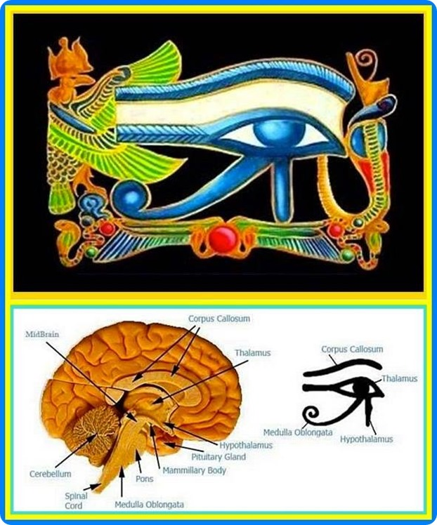 HORUS EYE EXPLANATION