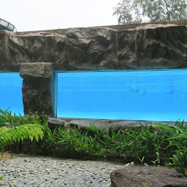 Elevated Lap Pool by Dennis  Ng - Sports & Fitness Swimming (  )