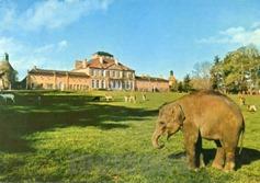St-Augustin éléphant