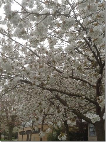Ipad mini  17-04-2015 13-47-21