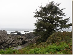Wild Pacific Trail (3)