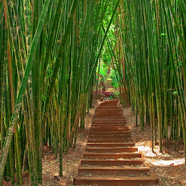 Bamboo Path by I Snapit - Landscapes Travel ( life, serenity, peace, trees )