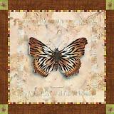 borboletas (34).jpg