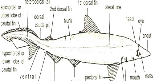 BIOLOGY DEAN: CHARACTERISTICS OF FISH