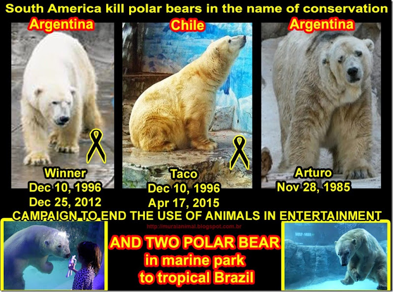 kill_polar_bear