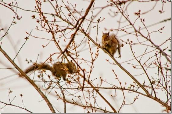 Squirrels, Spring, Trees, Wildlife, Nature