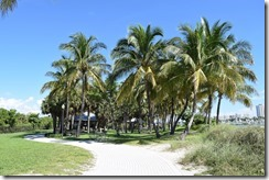 Picnic area under palms