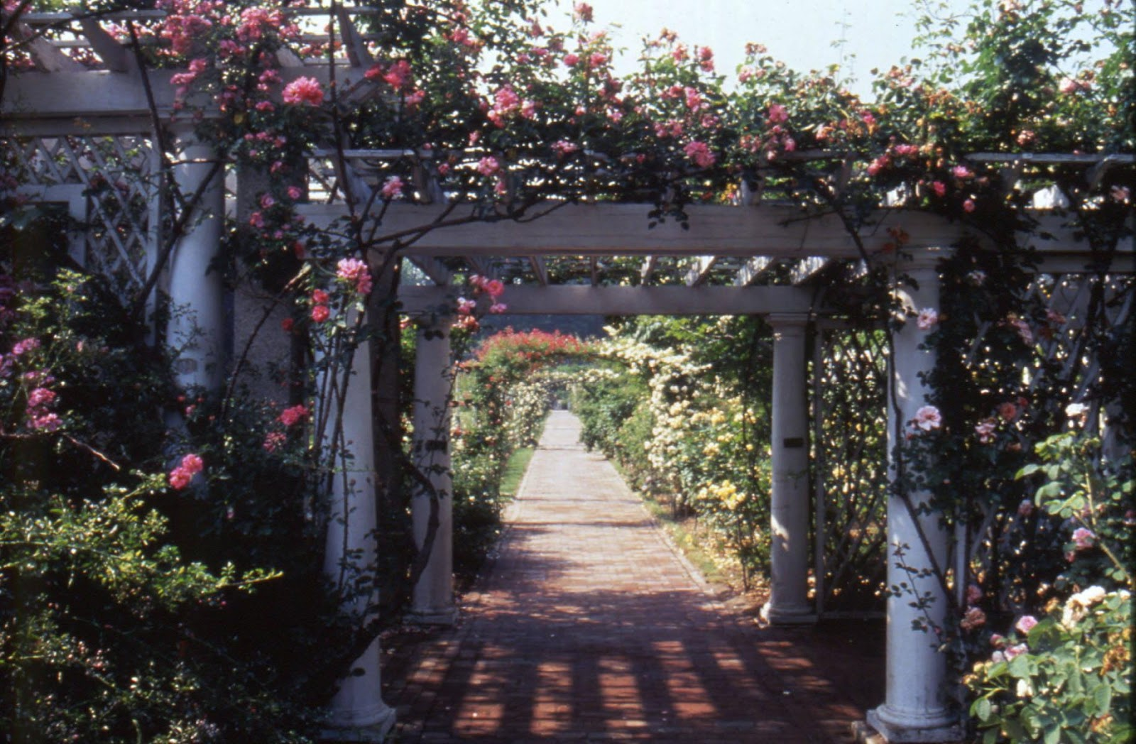 The Cranford Rose Garden