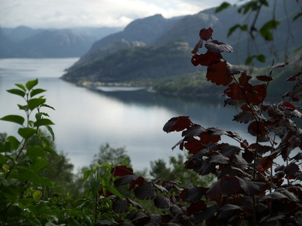 2015-08-12 Høllesli (32)