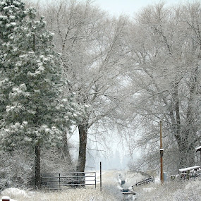 WINTER by Cynthia Dodd - Novices Only Landscapes ( winter, nature, snow, trees, landscape )