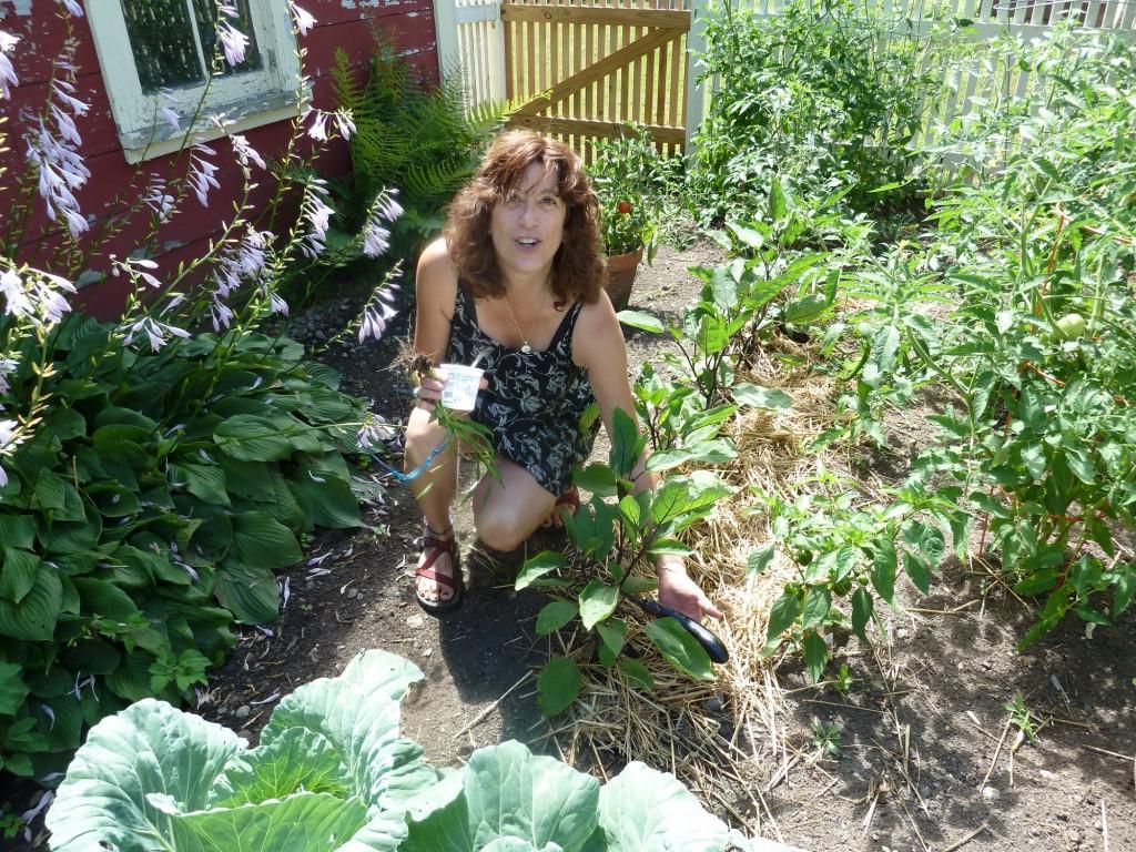 eggplant in her garden,