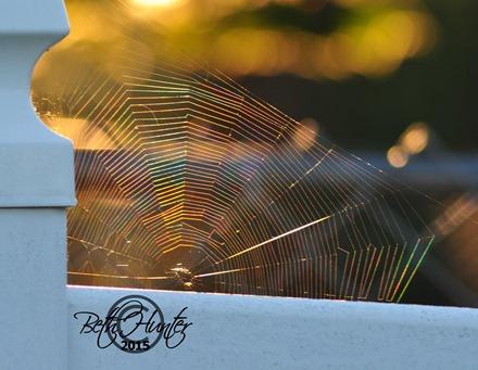 light-refracting-web-2