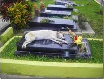 dog-grave-sleeping
