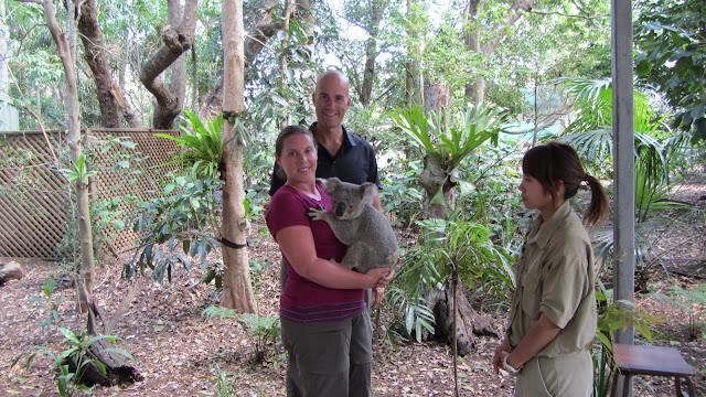 Koala cuddling.