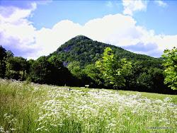"""Stráž nad Ohří je poprvé v historii zmiňována roku 1238 a byla založena za účelem vybírání cla. Původní název zněl """"Warta"""", český název byl používán později. Název obce je odvozen od kmenové strážnice na důležité obchodní stezce. Jednalo se o ves horníků a uhlířů."""