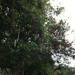 The beads in the trees in New Orleans 07222012-02