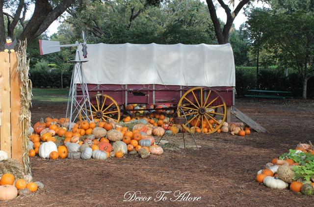 Pumpkins Arboretum 100