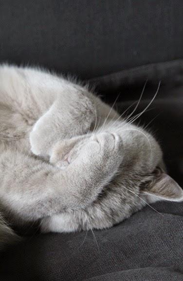 Yoris slaapt (2)