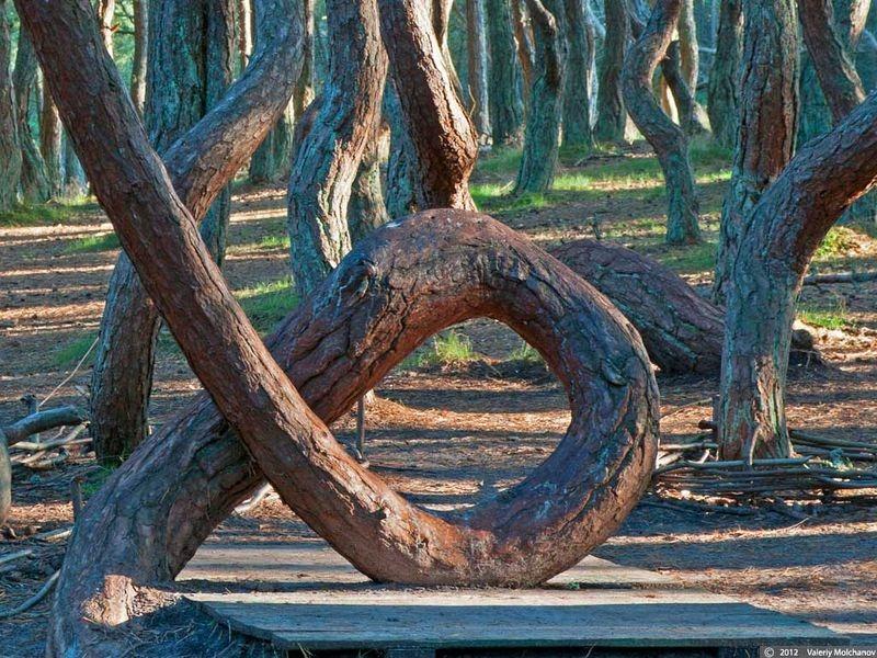 dancing-forest-kaliningrad-5