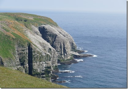 nl_argentia_cape_st_marys_view