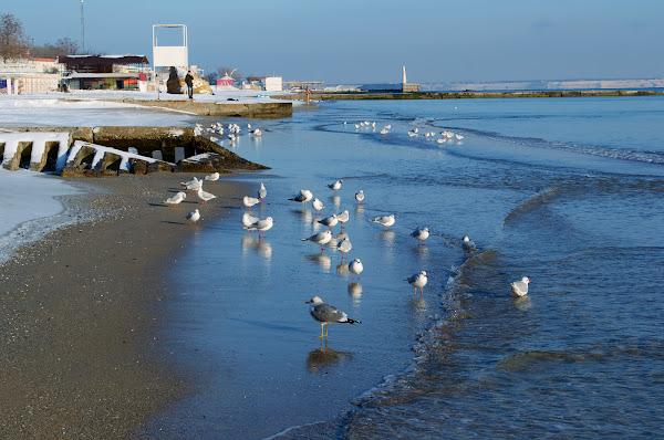 одесса зима пляж черное море чайки