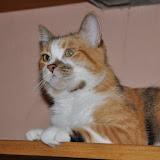 gatti 2012-8