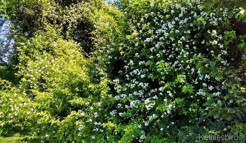 3. flowers everywhere