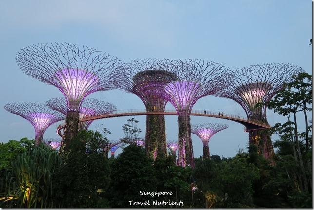 新加坡超級樹燈光秀 (13)