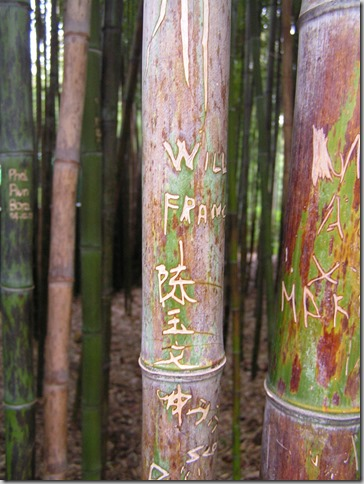 Bamboo grove with graffiti: Melbourne 2004