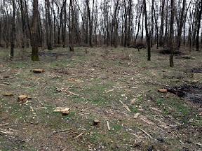 лес32.jpg
