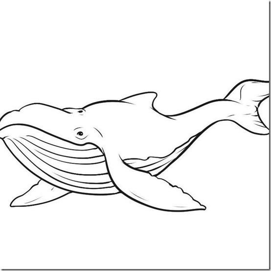 dibujos-ballenas-pintar- (4)