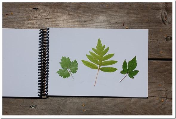 leaf book (4)