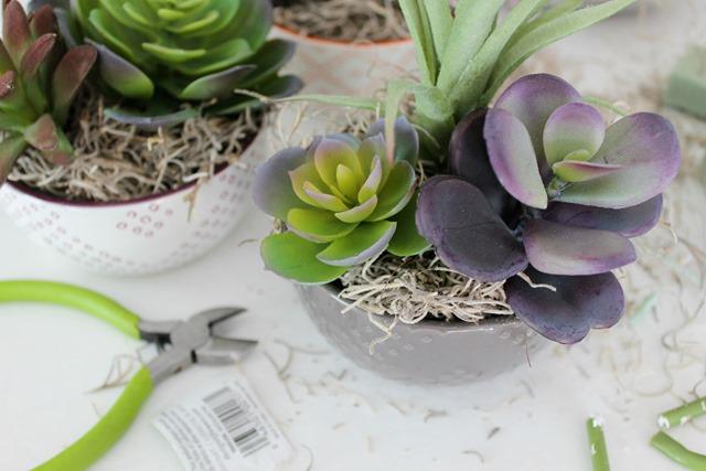 succulent gift ideas