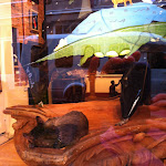 A guard kitty in a store in New Orleans 07242012-02