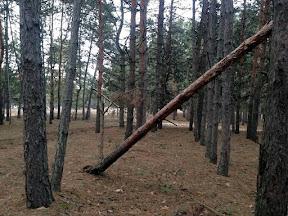 лес35.jpg