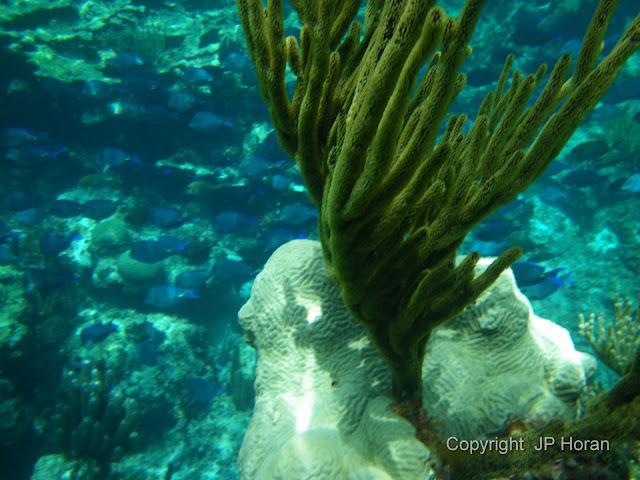 Buck Island Reef - IMGP1283.JPG