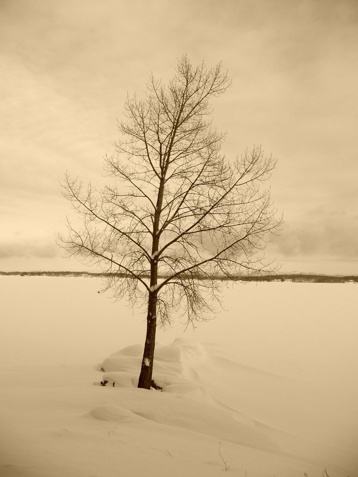 Let It Snow, Winter White