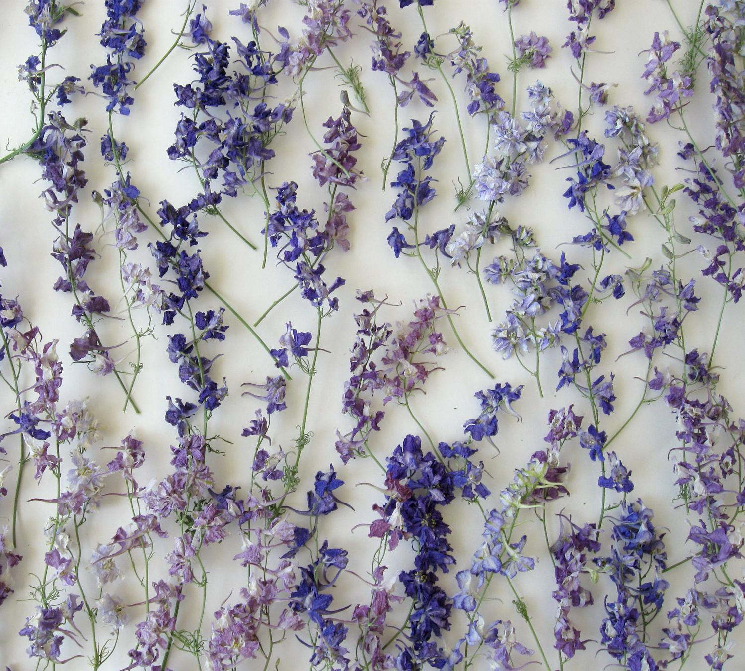 Dried Lavender Wedding Flowers