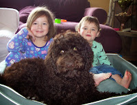 Gorgeousdoodles family love dog in CA.