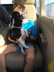 PnP Rescue - Darla the Blind Beagle - April 2015 - 13