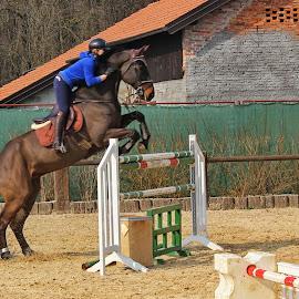 Trajbar Team 7 - Zaprešić,Croatia by Jerko Čačić - Animals Horses