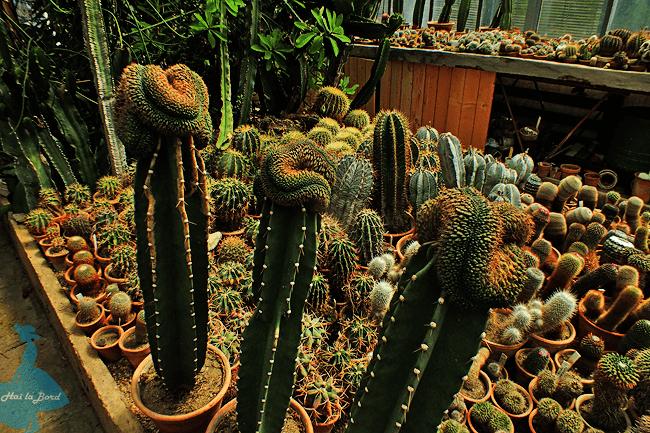 cactusi gradina botanica cluj