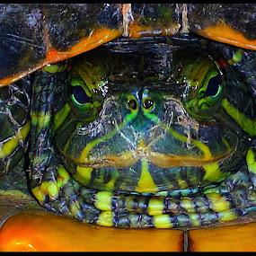 Mr Turtle  by Suzy Sutton - Animals Reptiles
