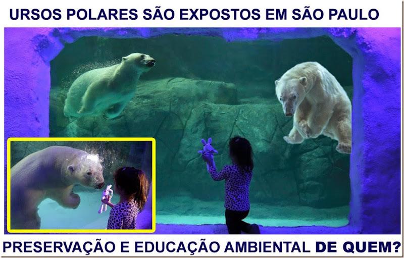 urso_aquario