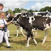 cattle07.jpg